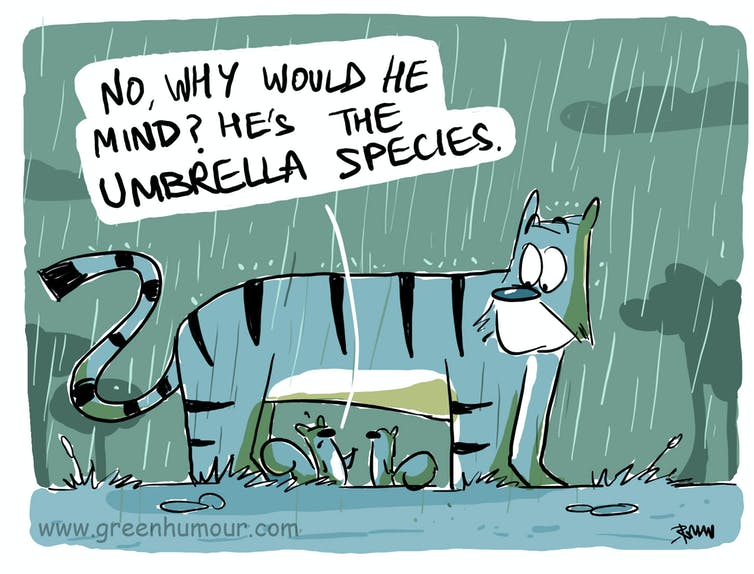 A cartoon depicting squirrels sheltering from rain under a tiger, with one saying 'No, why would he mind? He's the umbrella species.'