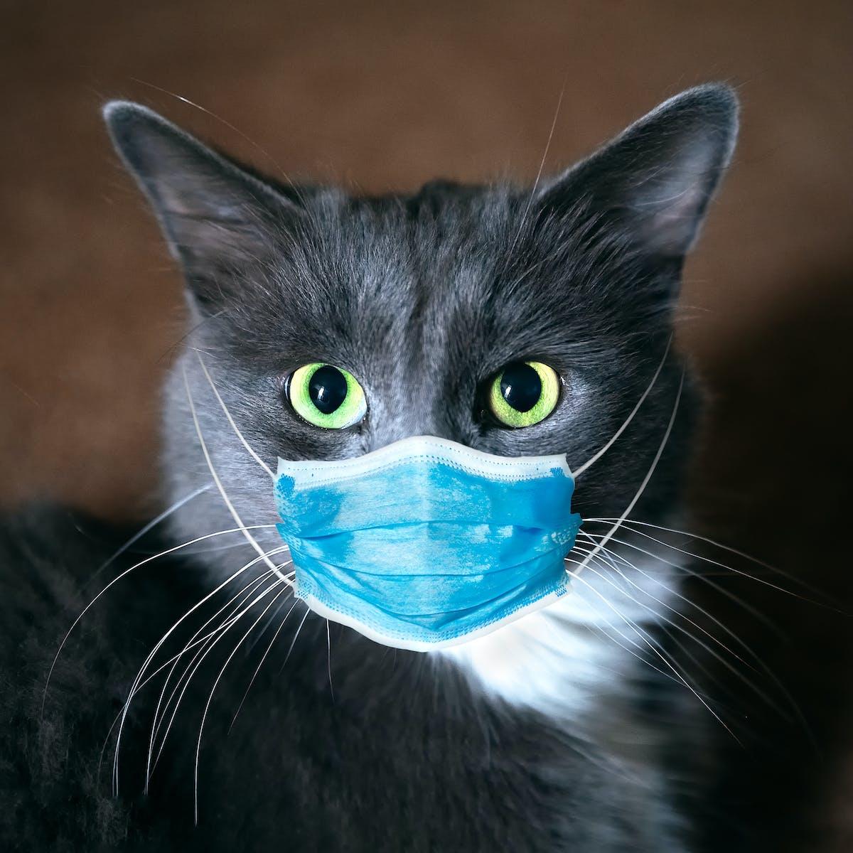 How we found coronavirus in a cat