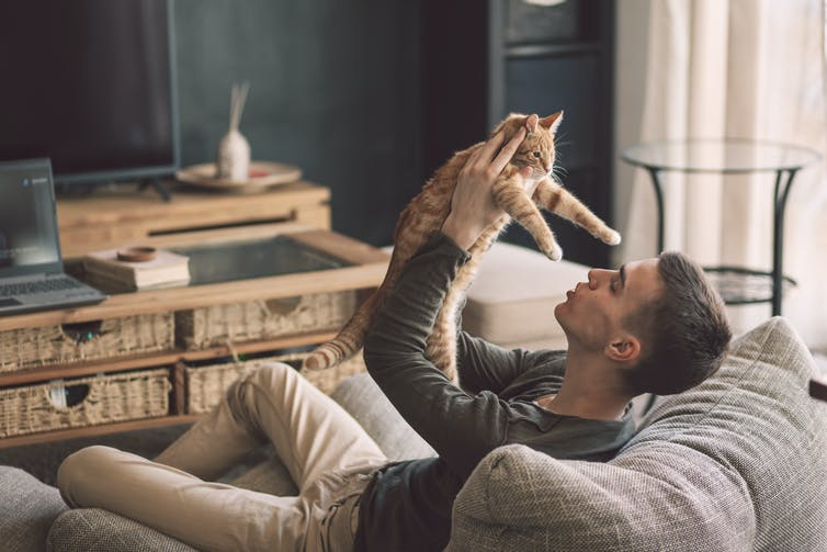 It's very unlikely your cat has coronavirus (SARS-CoV-2). Owner playing with cat while relaxing on modern couch in living room interior.