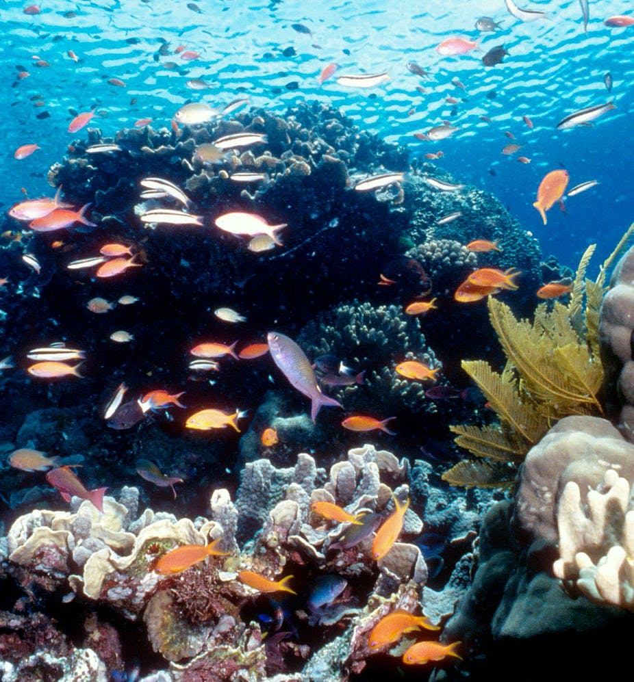 Freezing The Great Barrier Reef An Investment In Our Future