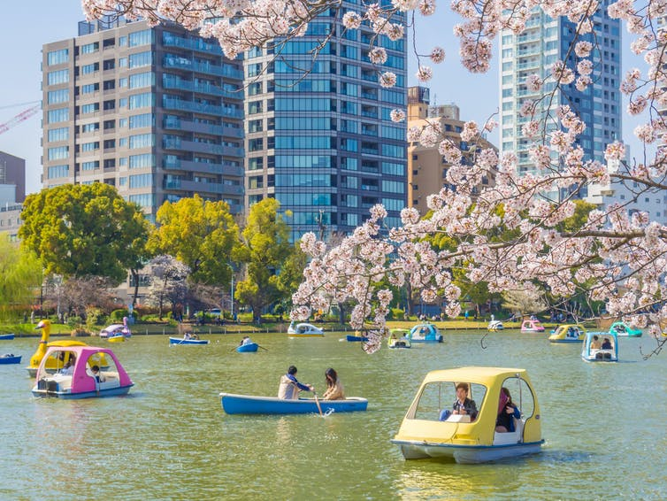 People on pleasure boats on a lake with cherry blossom in foreground and skyscrapers in background