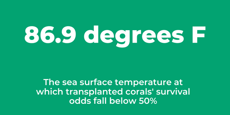 Graphic stating that at 86.9 degrees Fahrenheit, the chance of transplanted corals surviving falls below 50%