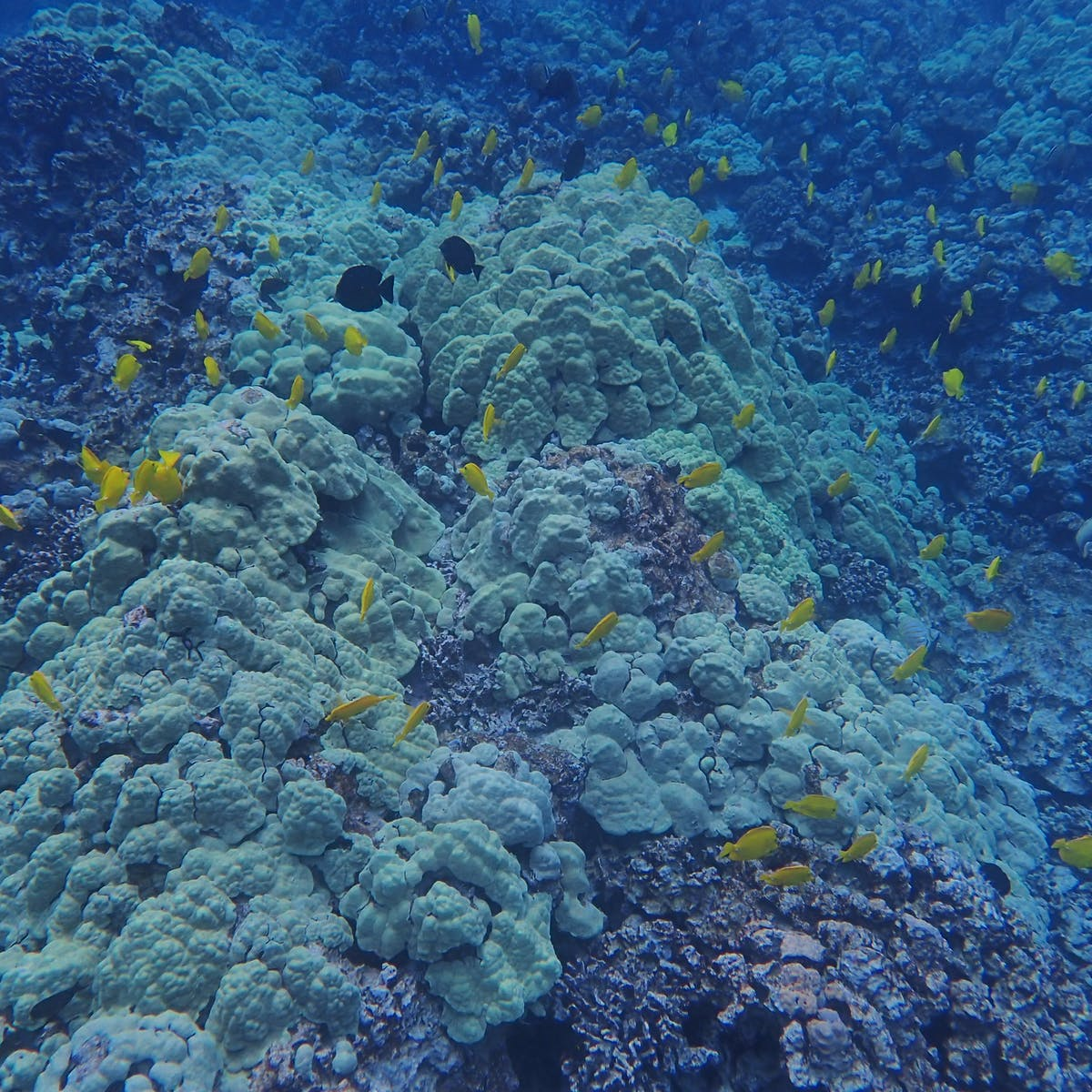 Ocean warming threatens coral reefs and soon could make it harder ...