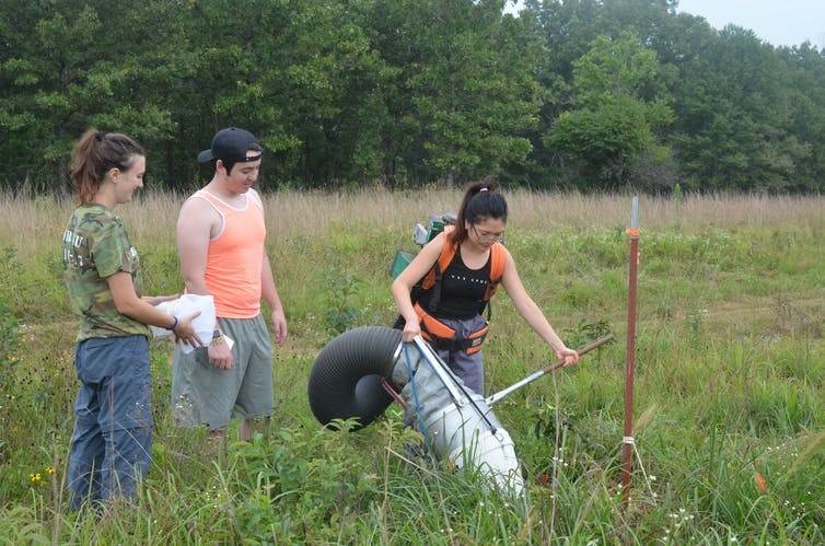 Three college students in field collecting insects with a large tube