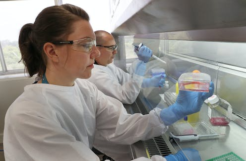 Female and male scientists working at a lab bench