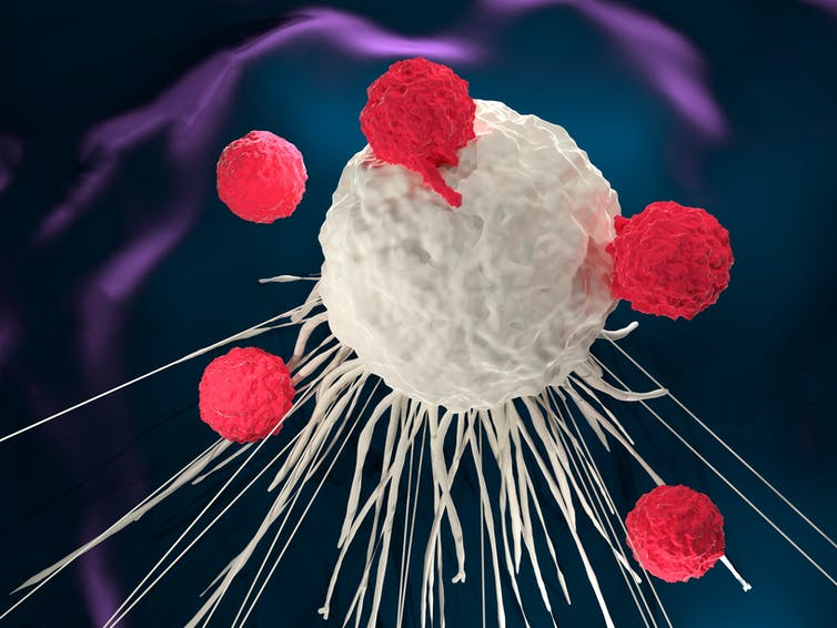 3D illustration of T cells attacking a cancer cell.