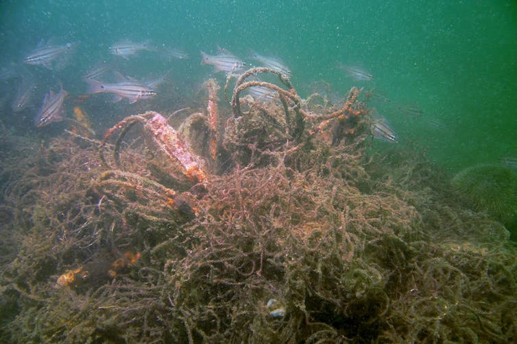 A group of fish swimming by a knot of nets