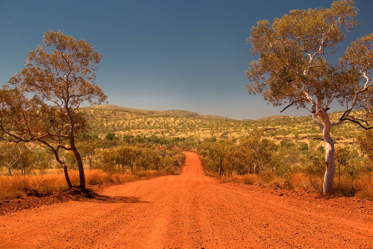 A red-dirt road through the WA desert, with a tree either side.
