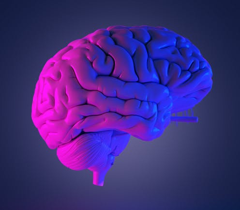 Model of a human brain lit by pink and blue light