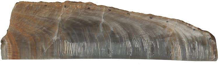 Close-up of an ancient stalagmite.