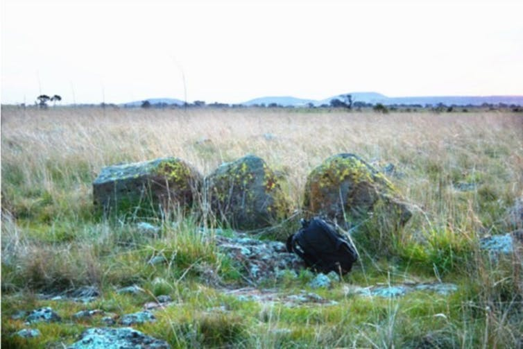 Dark boulders on grasslands represent the Wurdi Youang stone circle