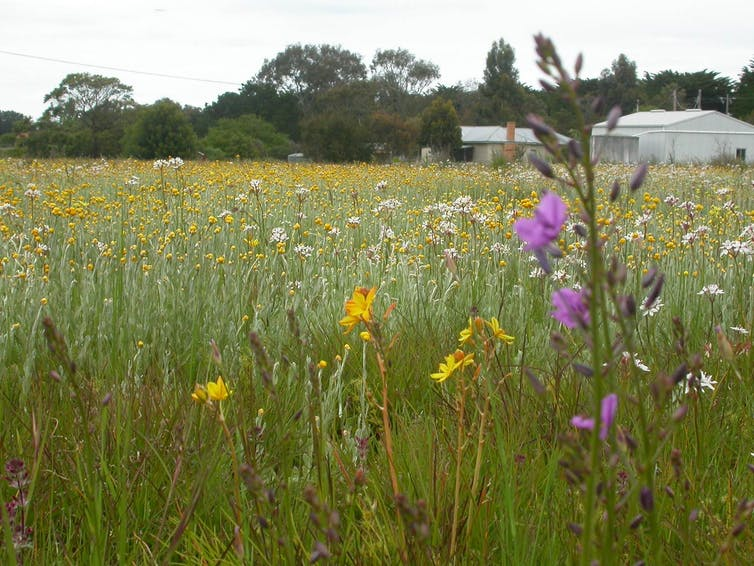 A purple flower grows in the foreground of lush grasslands