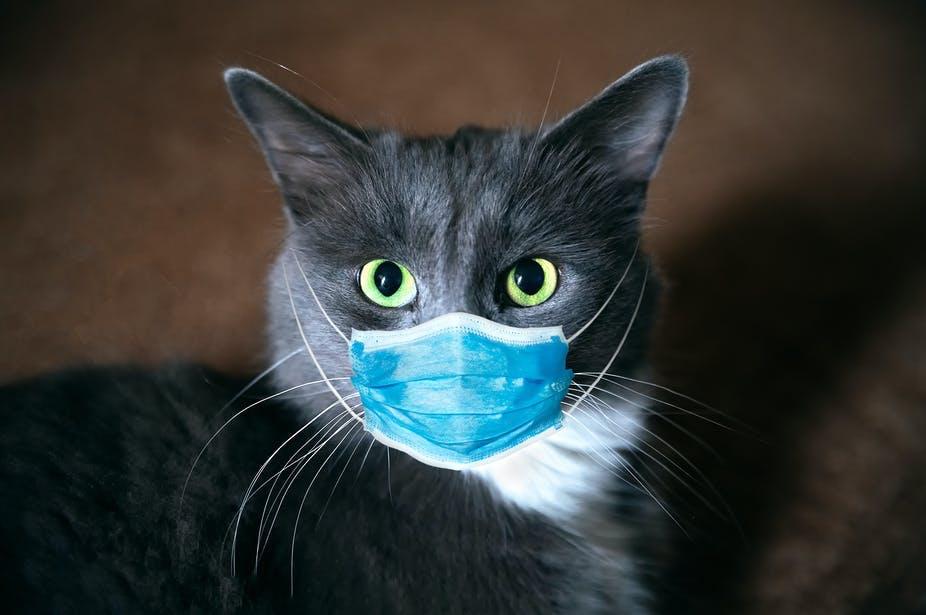 Bagaimana Kami Menemukan Coronavirus Pada Kucing