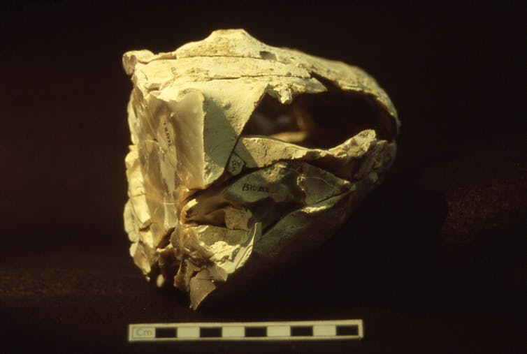 Knapping scatter from Boxgrove (Photo: UCL Institute of Archaeology, Author provided)
