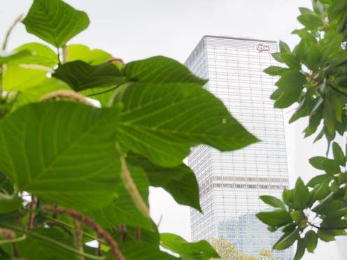 Leaves block view of skyscraper.