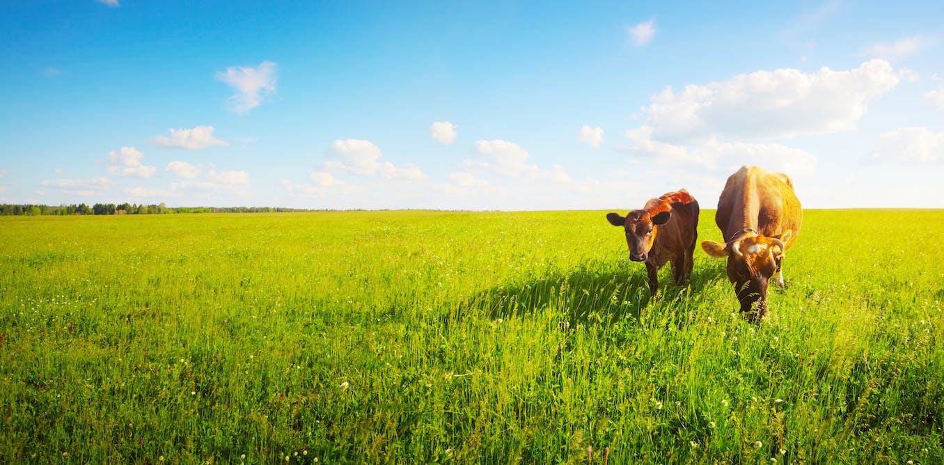 Podemos mejorar el planeta desde la alimentación?