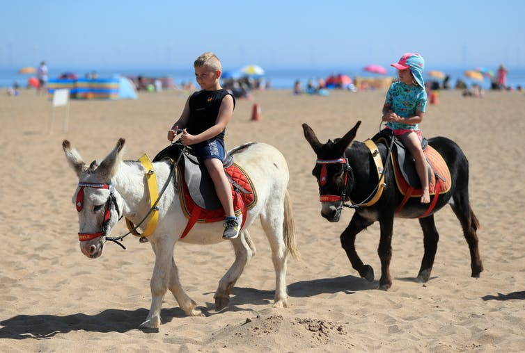 two children riding donkeys on a beach
