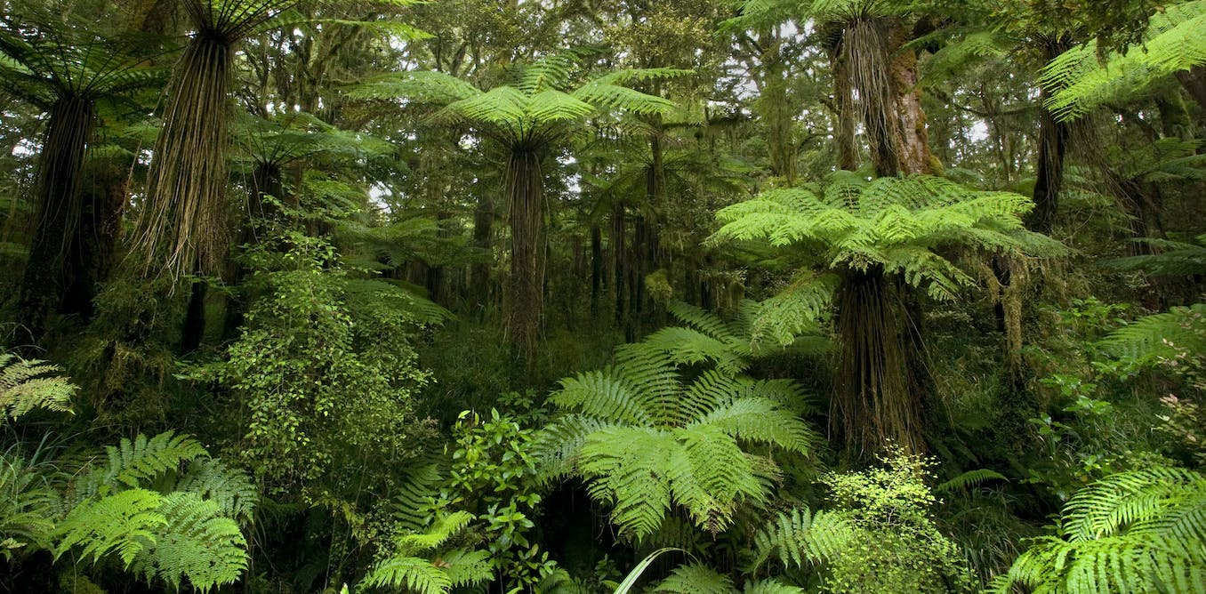 Tree ferns are older than dinosaurs. And thats not even the most interesting thing about them