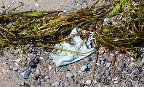 A surgical mask washed up with seaweed on a beach.