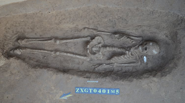 Excavation of human skeleton