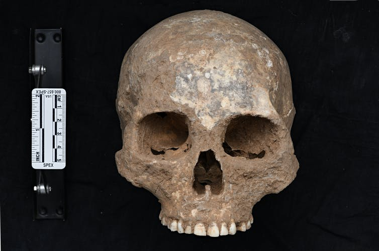 Ancient skull without bottom jaw