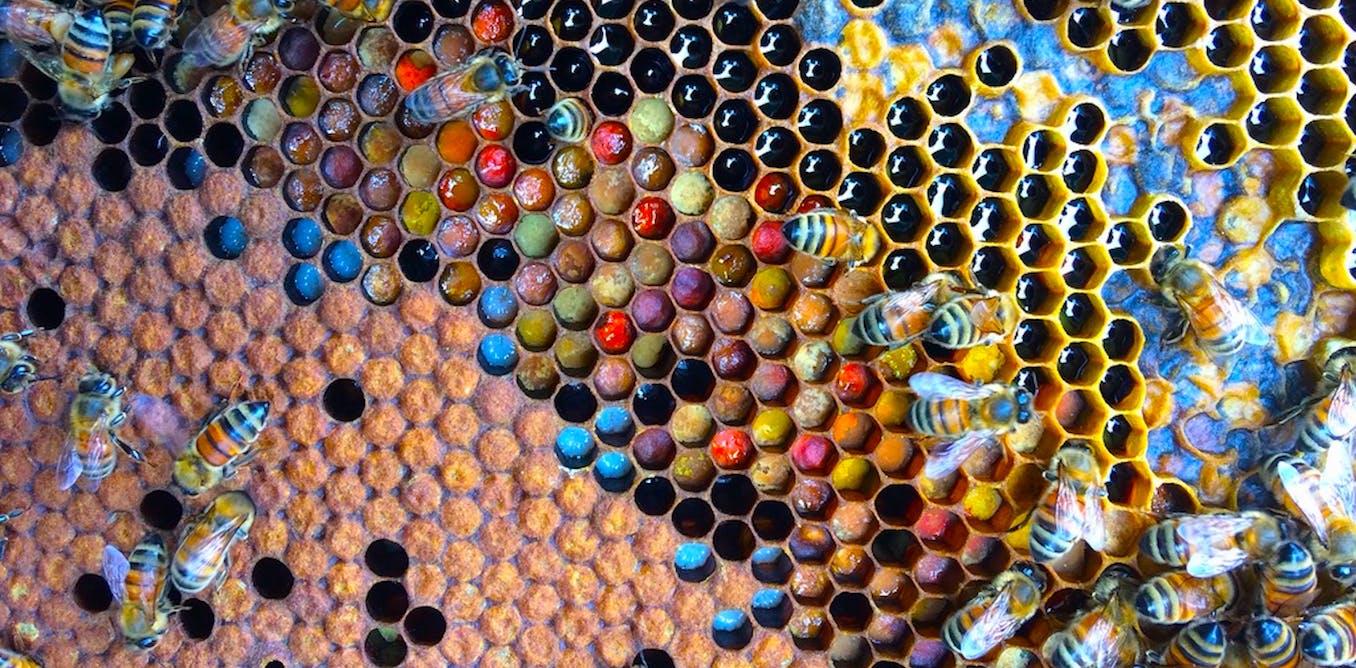 Curious Kids: how do bees make honey?