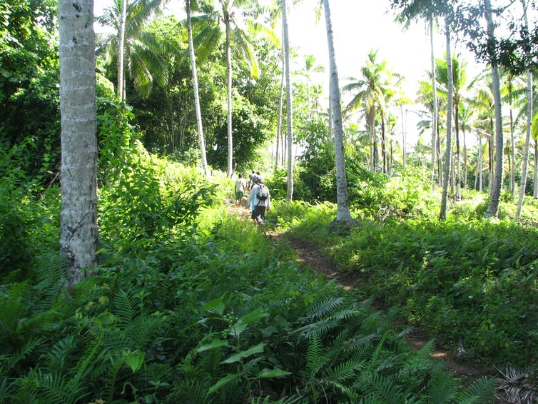 People walking among coconut trees