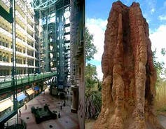 An image comparing the Eastgate Center with termites mounds which inspired the architecture