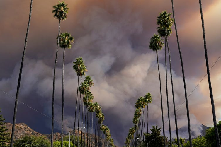 Wildfire smoke pours over palm trees in Azusa, Calif., on Aug. 13, 2020.