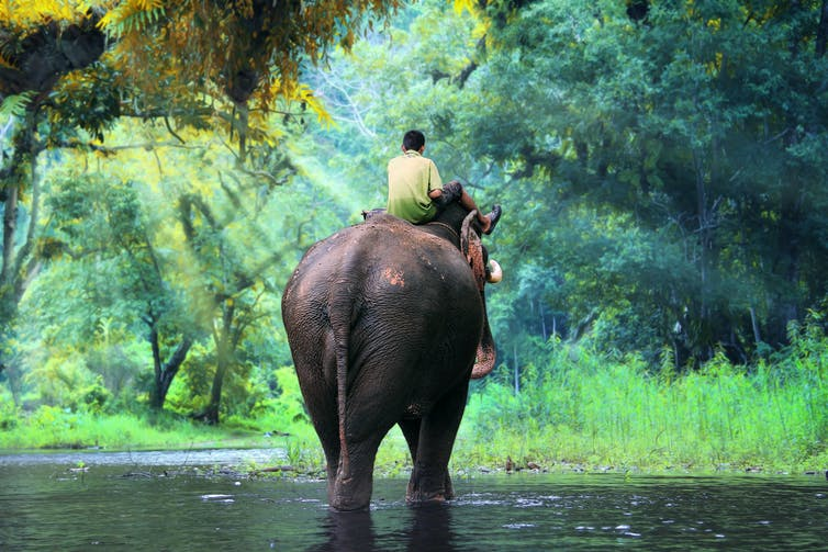 A man riding an elephant in the jungle.