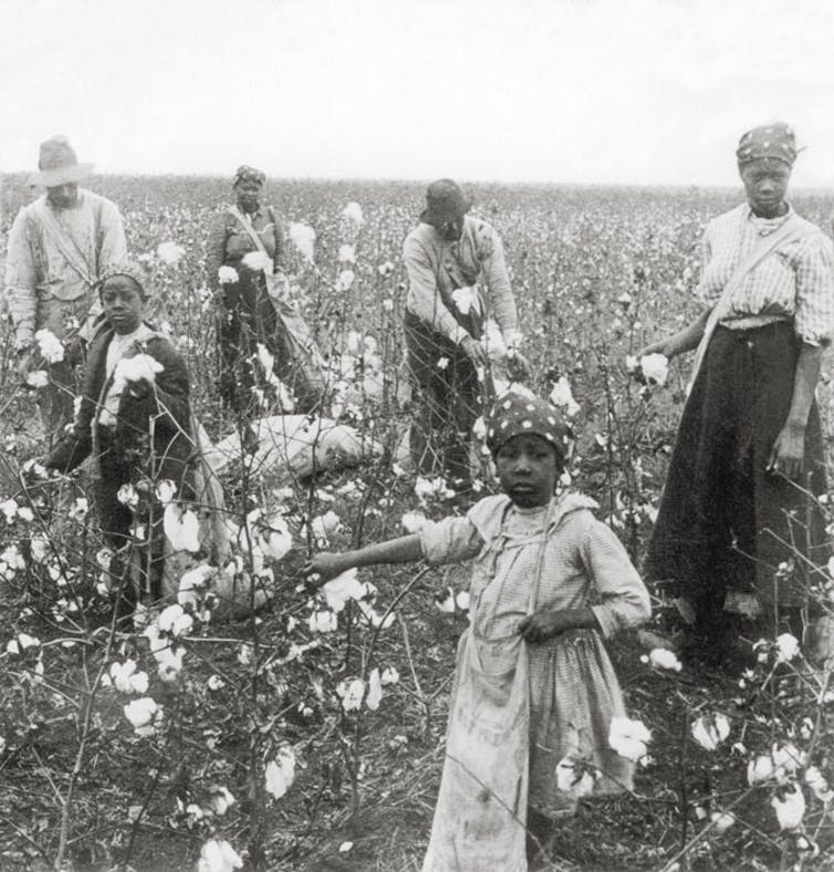 Black sharecroppers, picking cotton in Texas