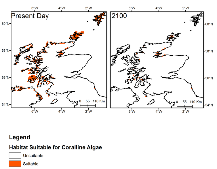 Two maps comparing maerl bed distribution off the Scottish coast today and in 2100.