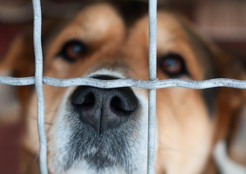 A sad dog behind a wire fence.
