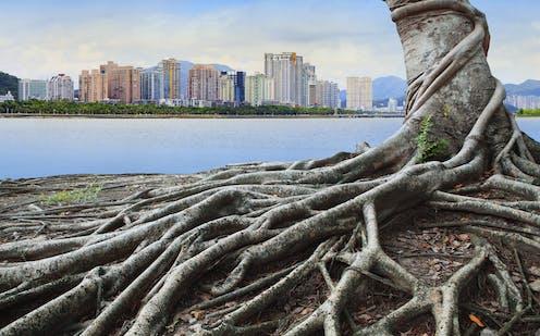 árbol con raíces vistas frente a una ciudad de rascacielos.