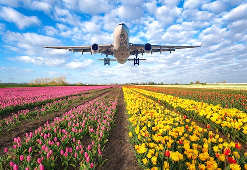 Large plane lands at an airport over a field of tulips