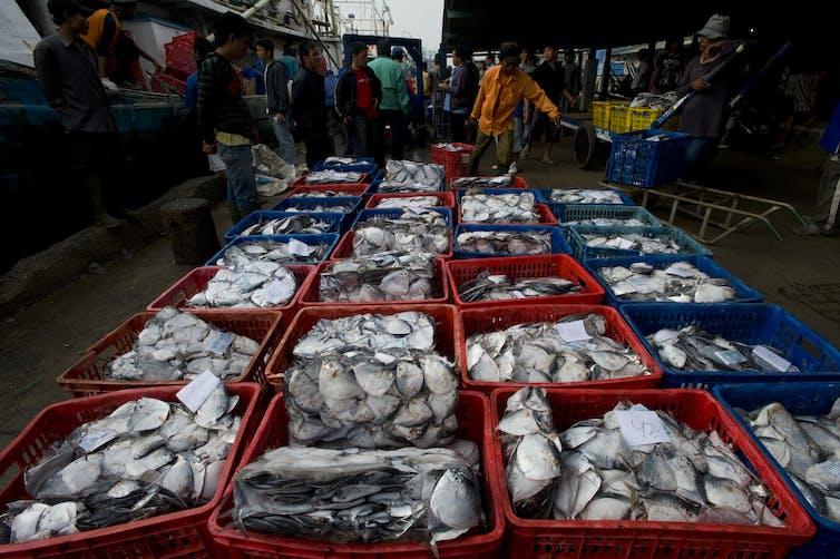 Sejumlah pekerja membongkar muat ikan laut hasil tangkapan di Pelabuhan Perikanan Muara Angke, Jakarta