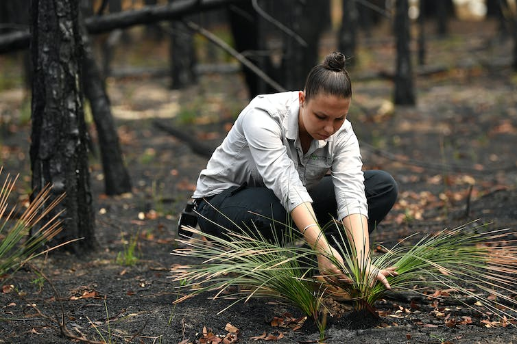 Amanda Shields from the Darkinjung Local Aboriginal Land Council inspects the plant regrowth after a fire.