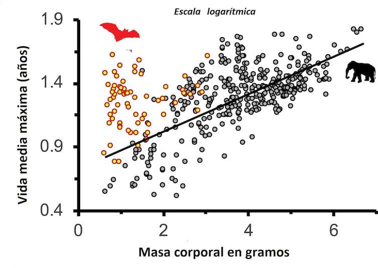 Inmunidad y longevidad: tenemos mucho que aprender de los murciélagos