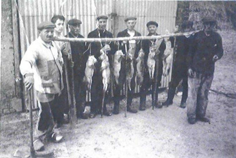Chasseurs de renards en France dans les années 1950.