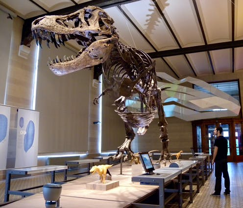 Article's author stands next to a T. rex skeleton