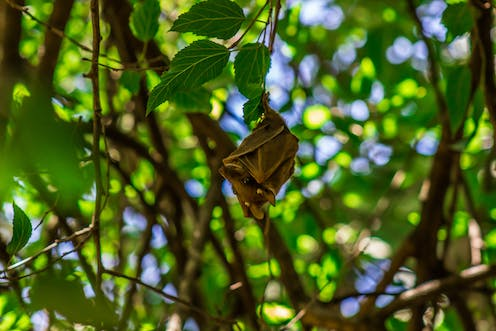 A bat hanging from a leafy tree.