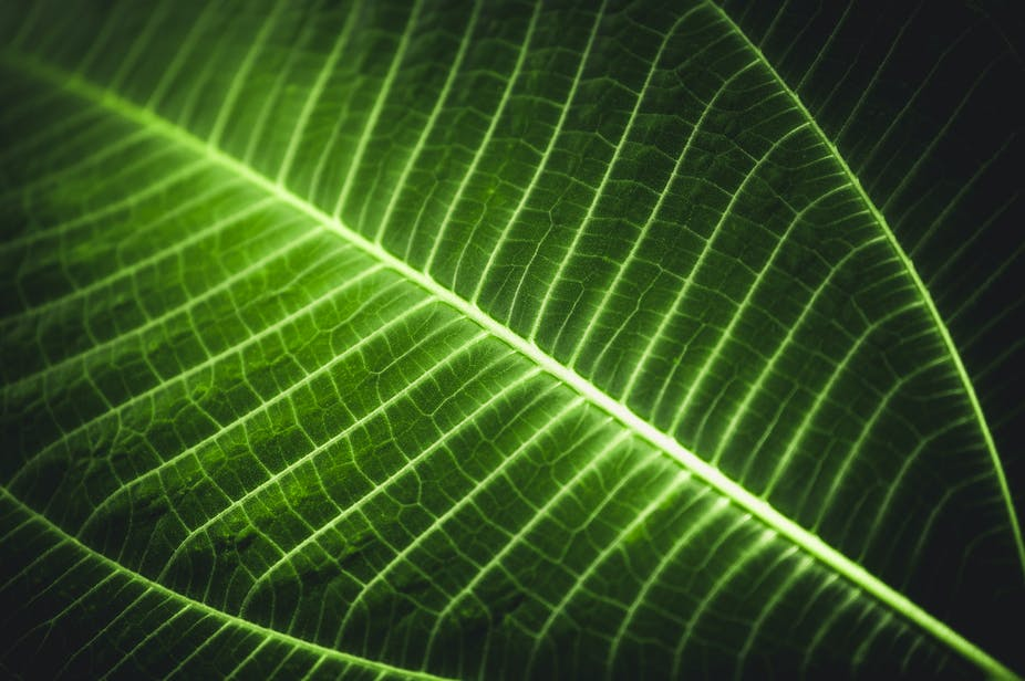 A closeup photo of a single leaf
