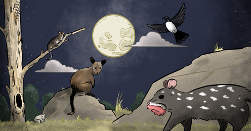 Illustration of a common ringtail possum, long-nosed potoroo, brush-tailed rock wallaby, willie wagtail and stalking eastern quoll illuminated by the moon.