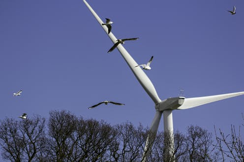 Birds fly towards a wind turbine.