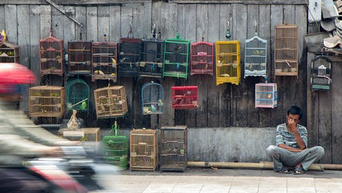 Birds in small cages for sale.