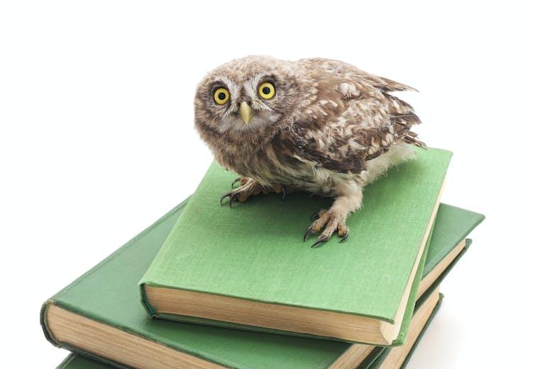 An owl perches atop a book stack.