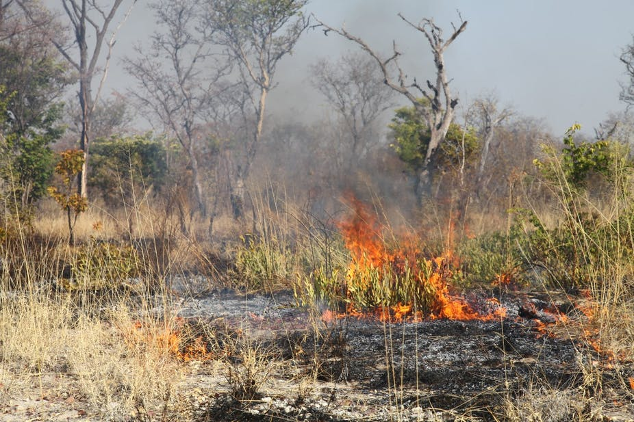 A dry veld scene with a fire burning the grass and plants, leaving the earth blackened.