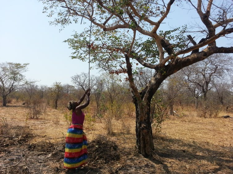 A woman wearing a brightly-coloured striped traditional skirt uses a long thin stick to tug at a branch of a tree in the veld.