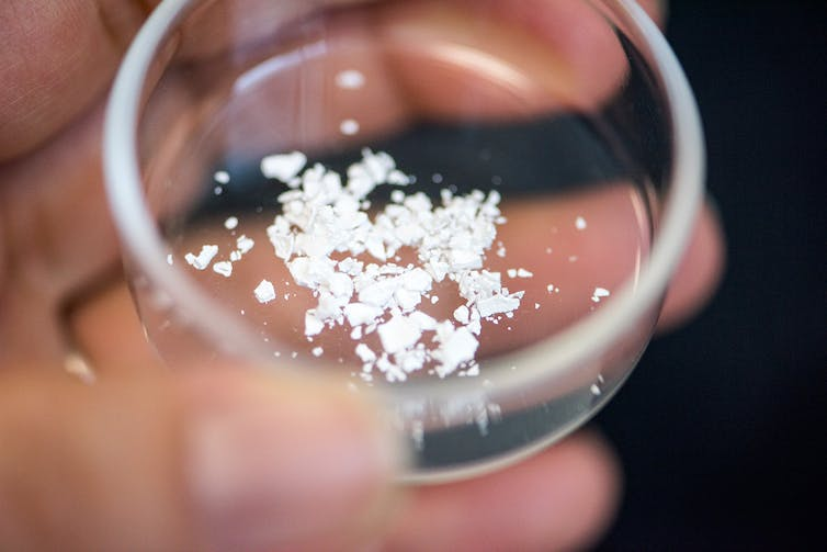 A transparent petri dish containing the silica-encased vaccine in white powder form.