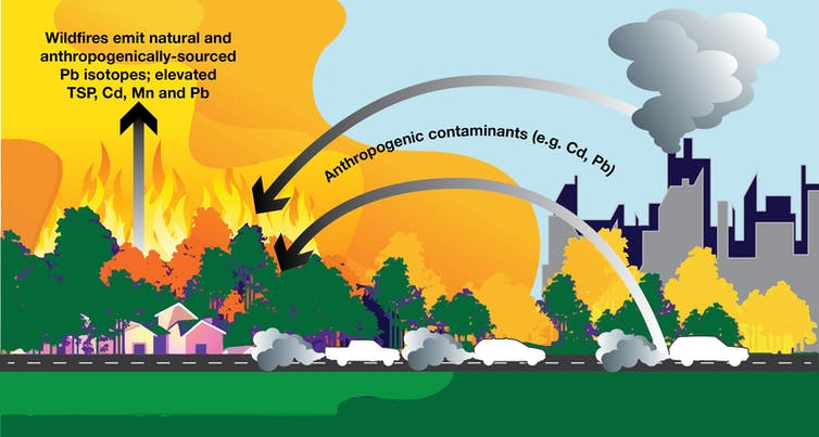 An infographic showing how forests soak up pollutants and then release them in fires.